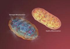 Rejuven360 Mitochondria