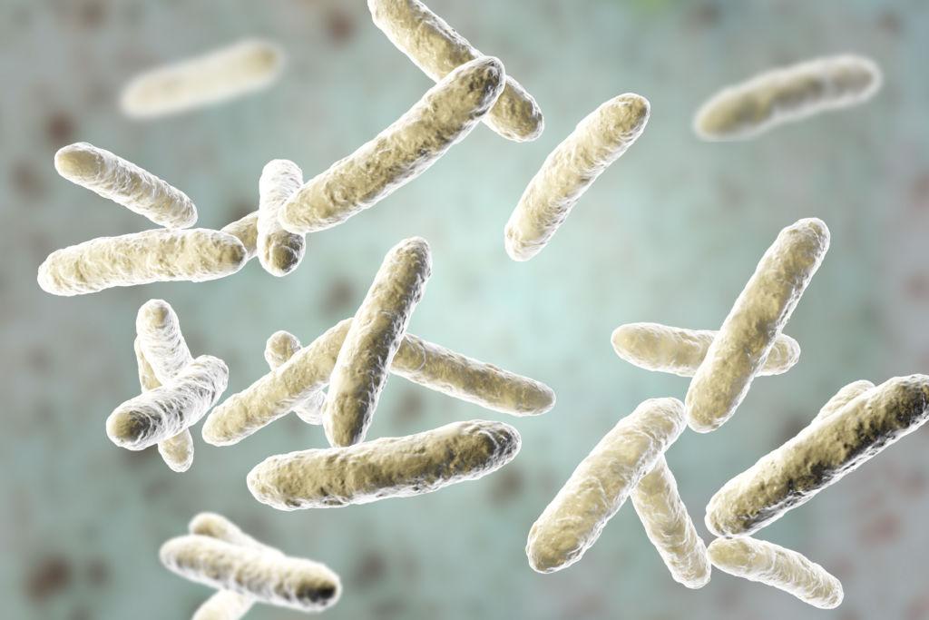 Probiotic EverLean
